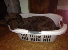 Maddy basket