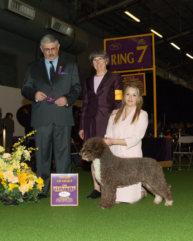 Fasu wins Award of Merit at Westminster 2017